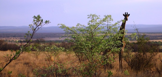 SHAKATI BUSH FACTS #4 – WATERBERG BIOSPHERE